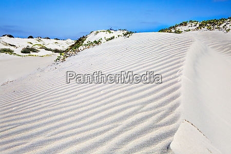 sand dunes isla magdalena baja california