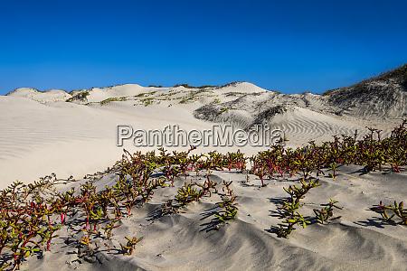mexico baja gulf of california magdalena