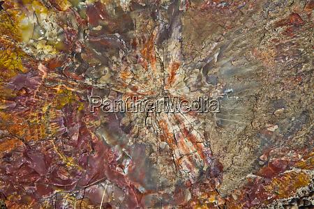close up of petrified logs petrified