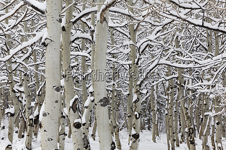 usa california sierra nevada range snow
