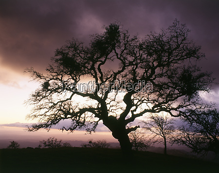 usa california view of silhouetted bare