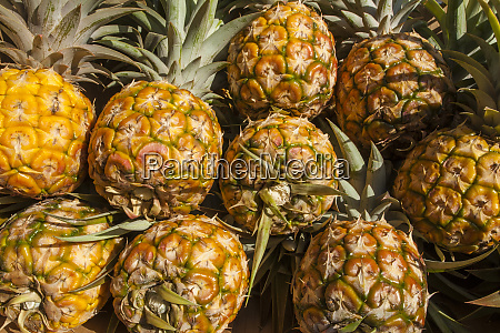 fresh pineapple at the saturday farmers