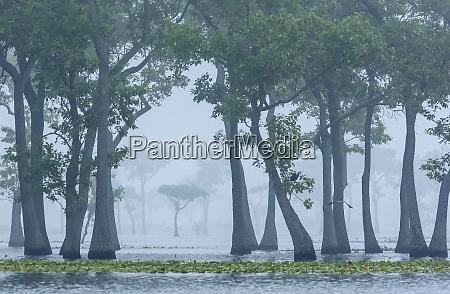 usa louisiana millers lake fog and
