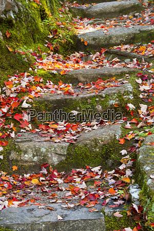 herbstblaetter treppen thuya garden northeast harbor