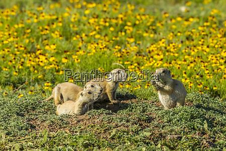 usa oklahoma wichita mountains national wildlife