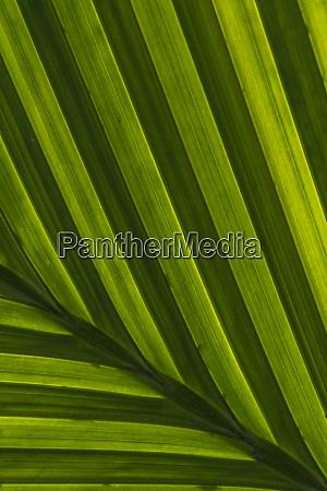 usa pennsylvania philadelphia leaf patterns close