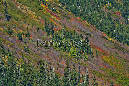 fall foliage stevens pass area washington