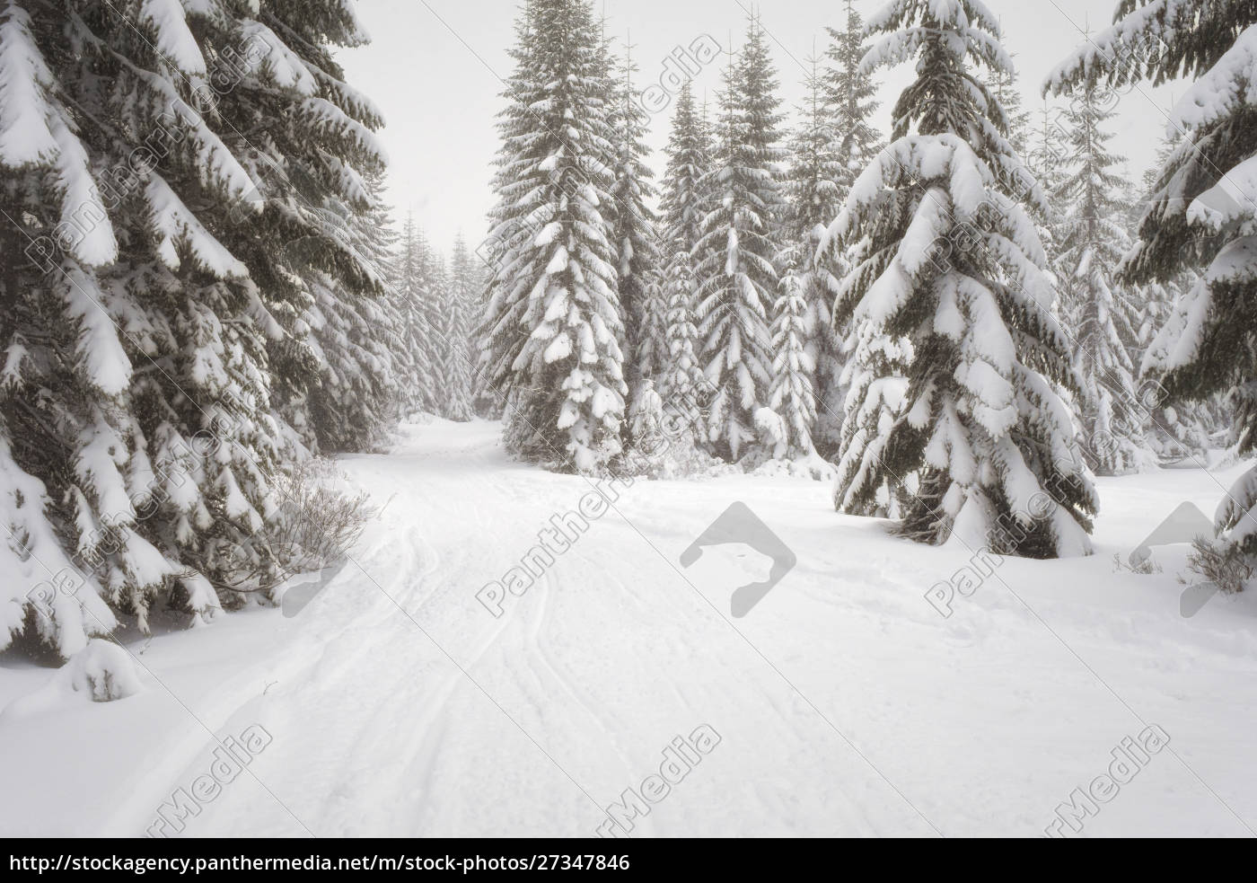 usa, washington, state, crystal, mountain, area., winterschnee. - 27347846