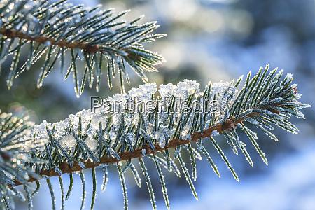 januar schnee in mill creek washington
