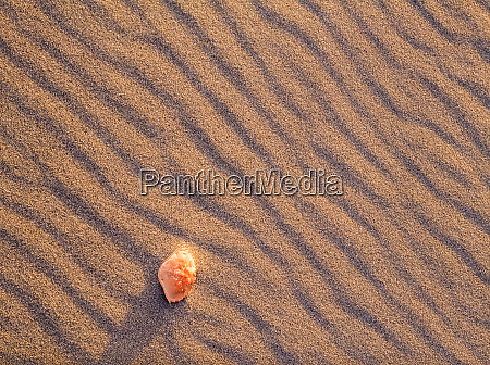 sand patterns and crab shell 2nd