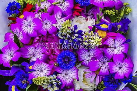 purple geraniums blue corn flower bouquet