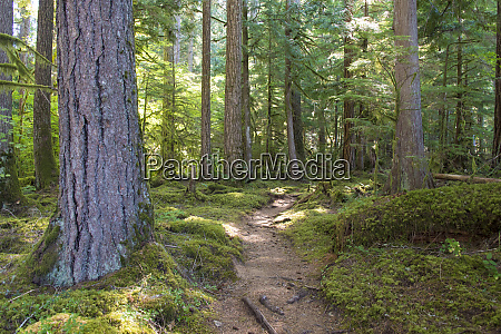 woodland, trail, anderson, point, campground, east - 27348388