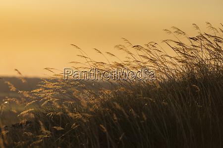 ruhiges grasen bei sonnenuntergang kakadu nationalpark
