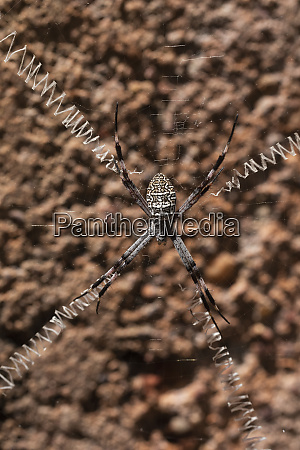 nahaufnahme spinne mit langen beinen ueber