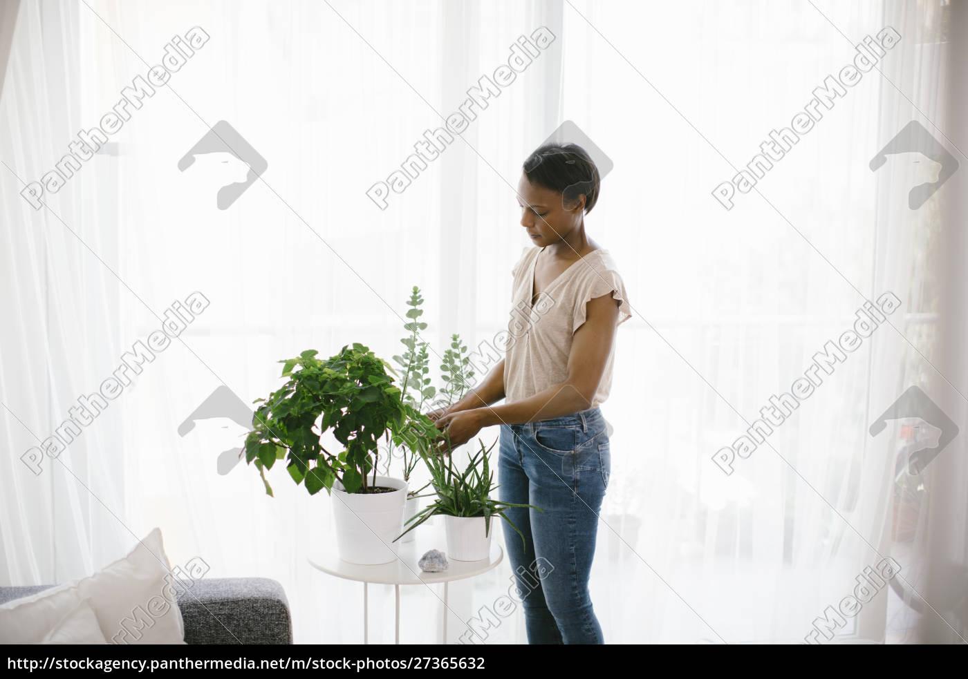 frau, die, zu, hause, pflanzen, arrangiert - 27365632