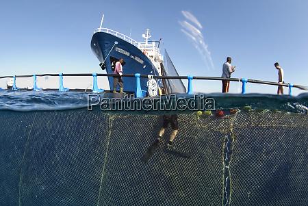 divers working on seine fishing net