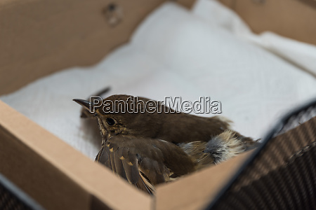 verletzter vogel hilfe