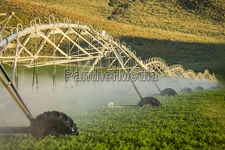 bewaesserungssystem spruehen von pflanzenfeld
