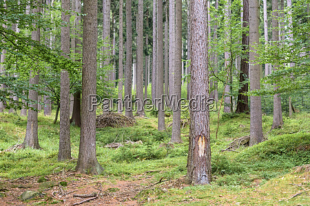 forest in giant mounstains in poland