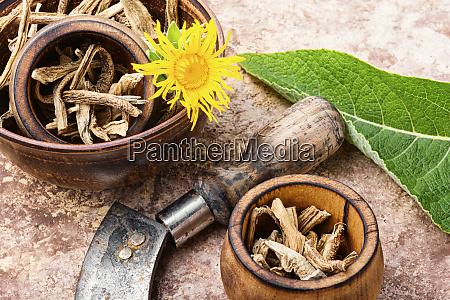 medicinal plant elecampane or inula