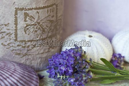 lila duftende lavendel bluete stillleben