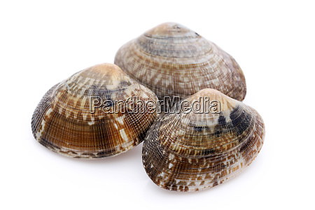 japanese, asari, clams, on, white, background - 27436044