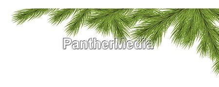 tannenzweige fir zweig zweig zweig weihnachten