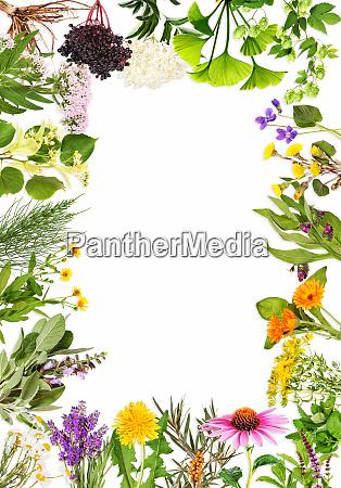 rahmen mit den wichtigsten heilpflanzen