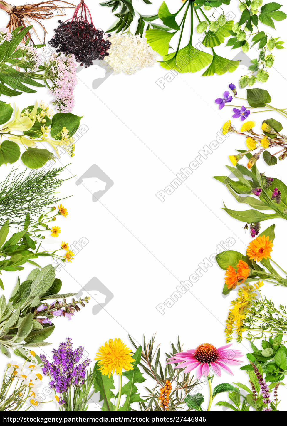 frame, with, the, main, medicinal, plants - 27446846