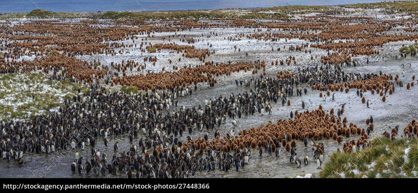 luftaufnahme, von, pinguinen, auf, der, südgeorgieninsel, antarktis - 27448366