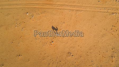 luftaufnahme eines kamels in der wueste
