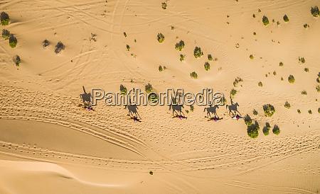 luftaufnahme von menschen die kamele in