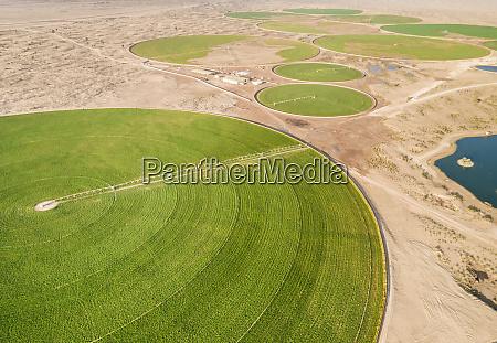 luftaufnahme von landwirtschaftlichen gruenen kreisen in
