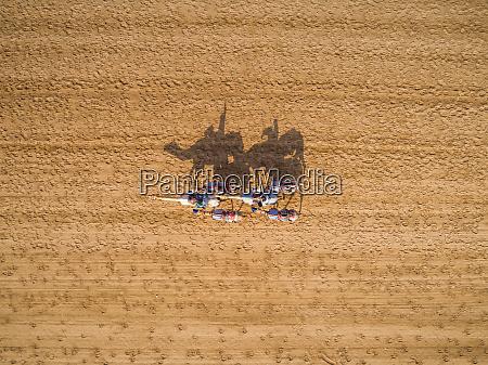 luftaufnahme einer gruppe von kamelen waehrend