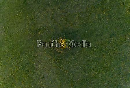 luftaufnahme einzelbaum im wiesenfeld in estland