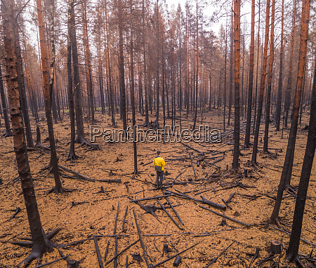 aerial view man standing on forest