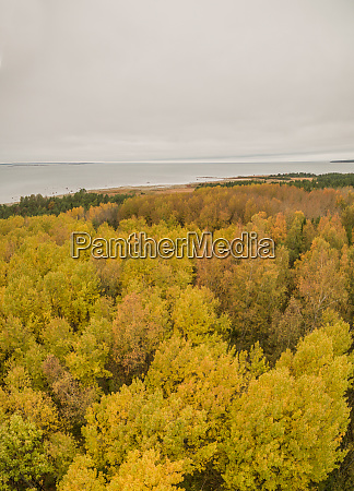 panoramic aerial view of colorful treetops
