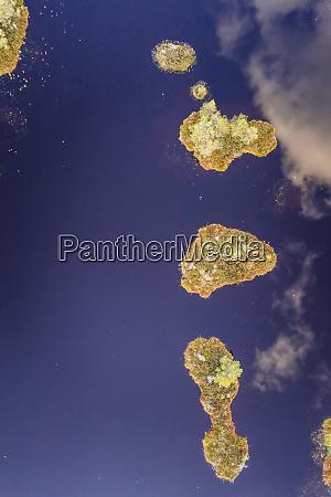luftaufnahme von marimetsa moor im naturschutzgebiet