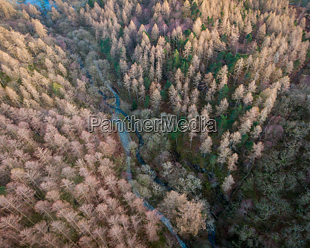 aerial view of trees during winter