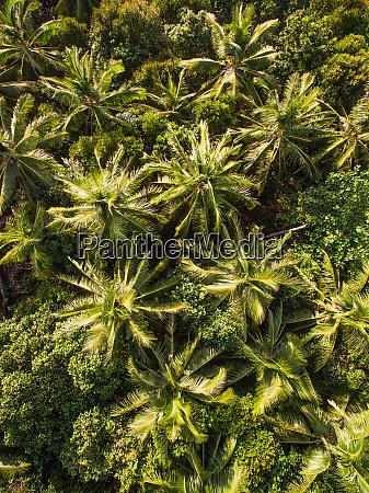 abstrakte luftaufnahme von palmen