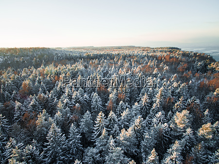 aerial view of snowy forest on