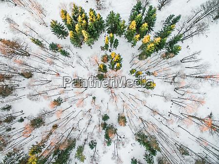 estland muraste oben luft atmosphaere herbst