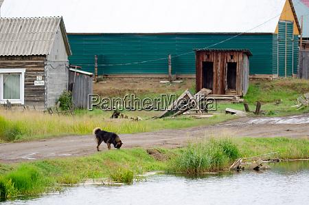 ein einsamer zotteliger hund laeuft auf