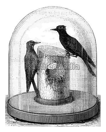 telegraphenpol von specht durchloechert vintage gravur