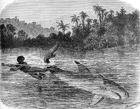 kick a shark vintage engraving