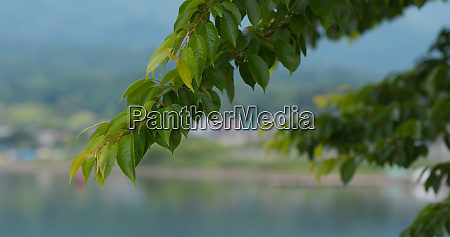 green plant tree in the countryside
