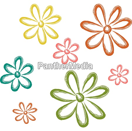 aster flower vector or color illustration
