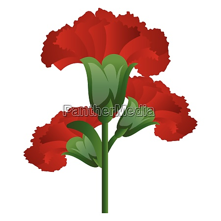 vector illustration of red carnation