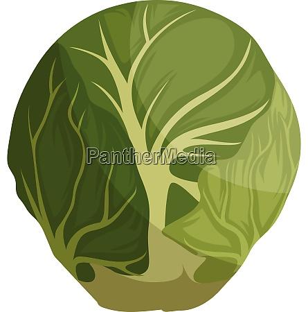 green brussel sprout cartoon vector illustration