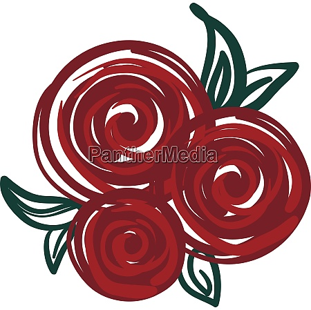 red rose painting vector or color